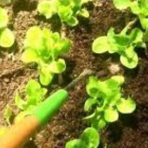 garden Hand Tools |